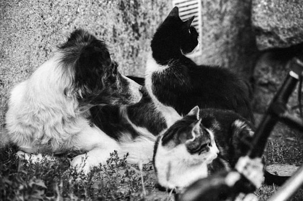 dogs and cat - Gustav Eckart, Photographie