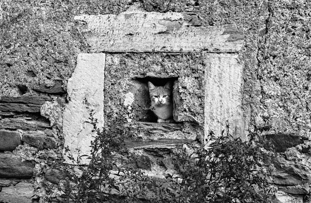 cat - Gustav Eckart, Photographie