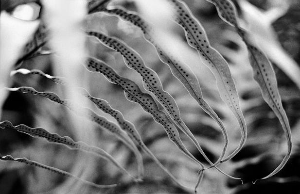 giant fern - Gustav Eckart, Photography