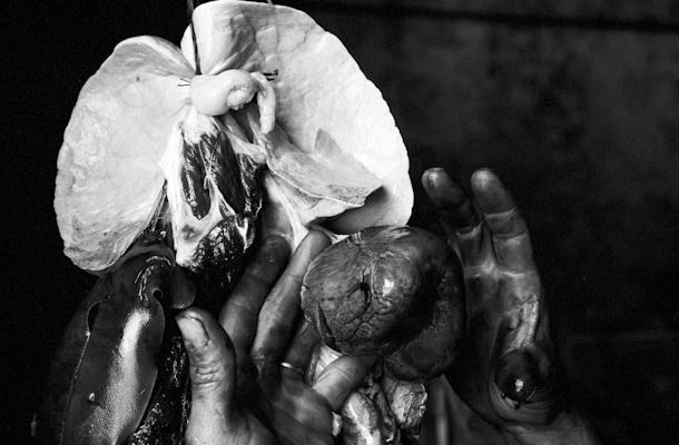 hands heart and lungs - Gustav Eckart, Photography