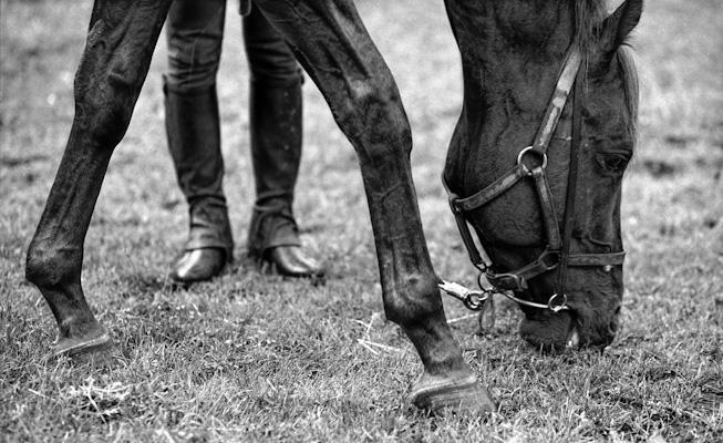 strange hind legs - Gustav Eckart, Photographie