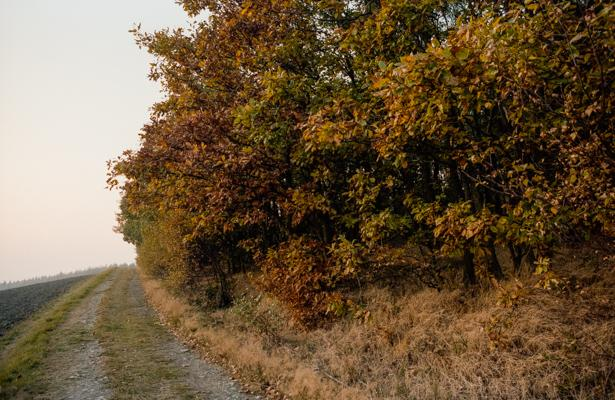 Siegerland 1985 - 40 - Gustav Eckart, Photography