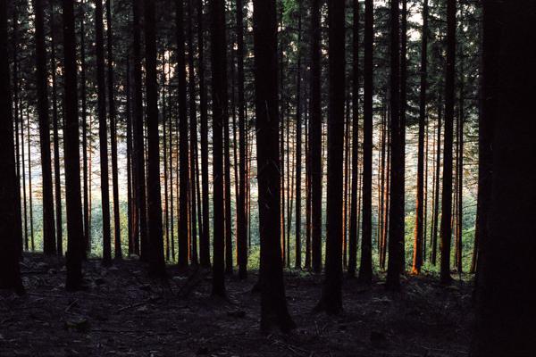 Siegerland 1985 - 07 - Gustav Eckart, Photography