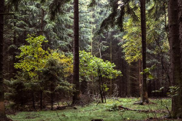 Siegerland 1985 - 12 - Gustav Eckart, Photographie