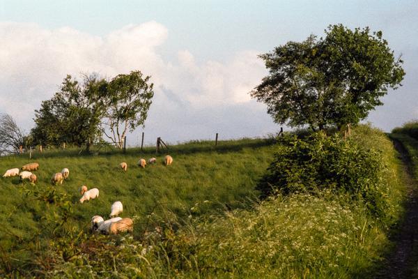 Siegerland 1985 - 20 - Gustav Eckart, Photographie