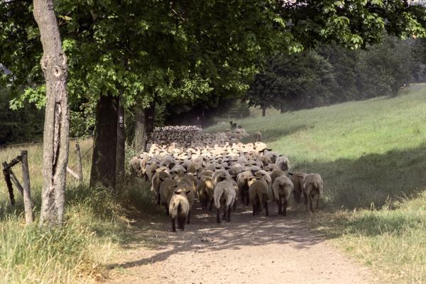 Siegerland 1985 - 22 - Gustav Eckart, Photographie