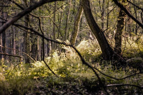 Siegerland 1986 - 01 - Gustav Eckart, Photographie
