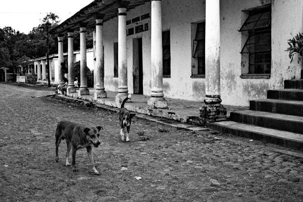 chiens de la rue à Antigua Vera Cruz 1988 - Gustav Eckart, Photographie