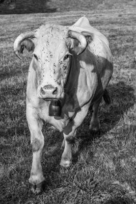 Tiere 29 - Gustav Eckart, Photographie