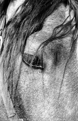 Tiere 32 - Gustav Eckart, Photography