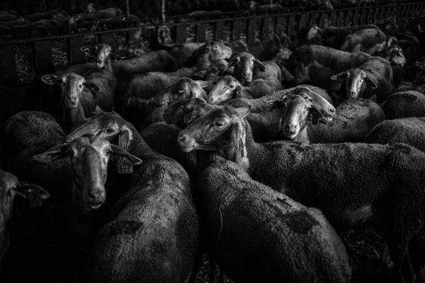 Tiere 40 - Gustav Eckart, Photography