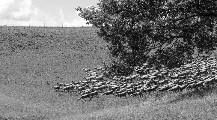 Tiere 42 - Gustav Eckart, Photography
