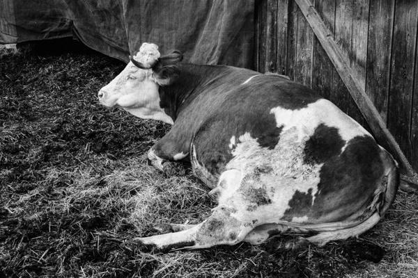 Tiere 47 - Gustav Eckart, Photographie