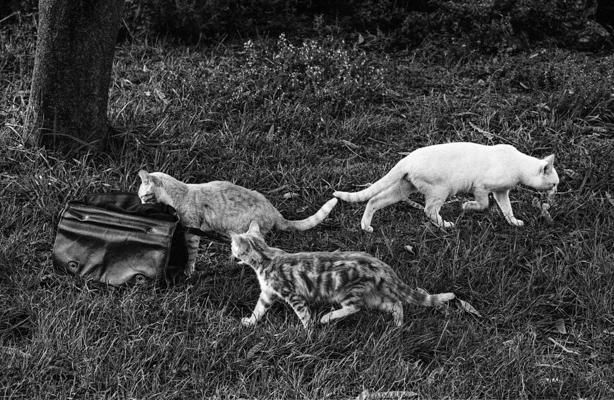 Tiere 50 - Gustav Eckart, Photography