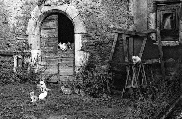 Tiere 51 - Gustav Eckart, Photographie