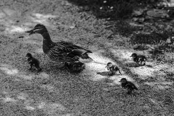 Tiere 52 - Gustav Eckart, Photographie