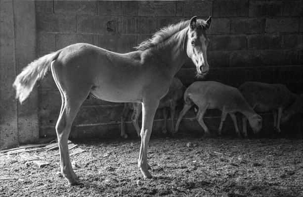 Tiere 53 - Gustav Eckart, Photographie
