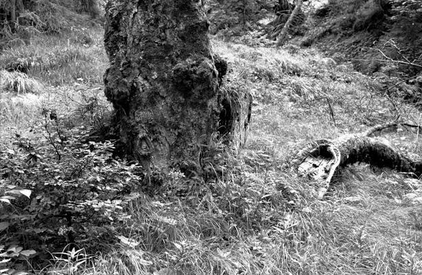 tronc - Gustav Eckart, Photographie
